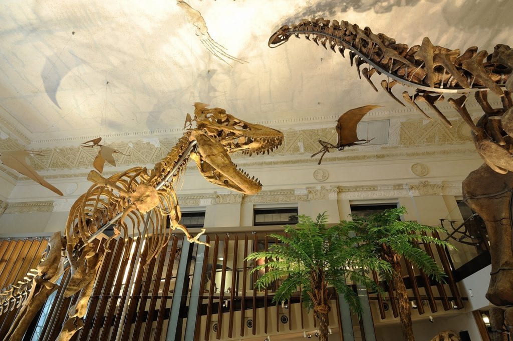 古生物大展-生命的史詩與演化共舞
