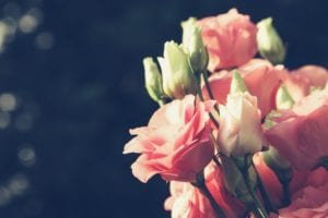 母親節的花-洋桔梗